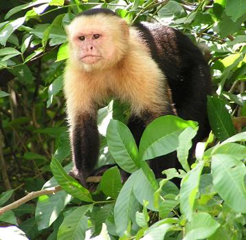 ペット サル サルの飼育方法!初心者でも飼いやすい種類や値段、性格、注意点とは?